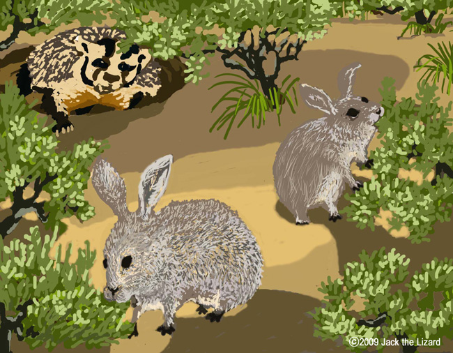 Pygmy Rabbit and badger