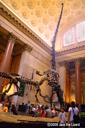 American Museum Of Natural History Dinosaurs Jack The