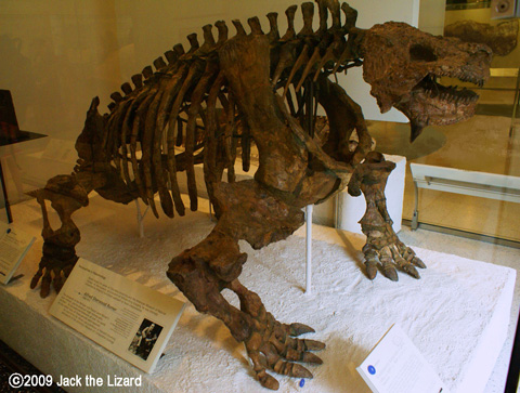 scutosaurus skeleton  scutosaurus scutosaurus lived about