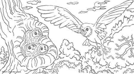 Coloring Pages of the Barn Owl