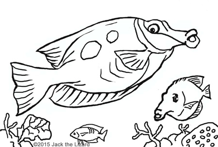 Superieur Coloring Pages Of Blotched Foxface