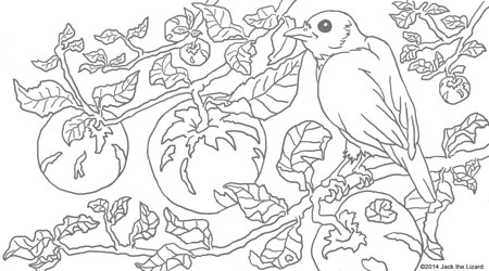 Coloring Pages of Blue Bird