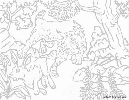 Coloring Pages of Bobcat