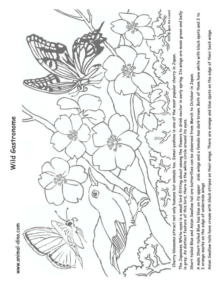 Animal Coloring Page Cherry Blossom Print Size Jack the