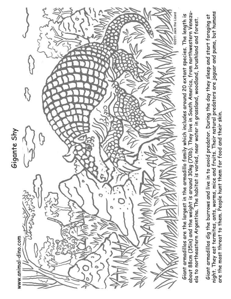 animal coloring page giant armadillo print size jack the lizared wonder world