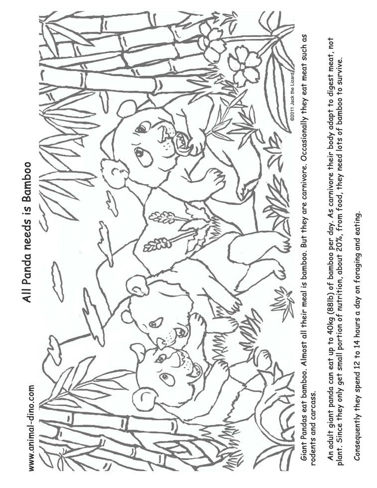 Animal Coloring Page Giant Panda Print Size  Jack the Lizared