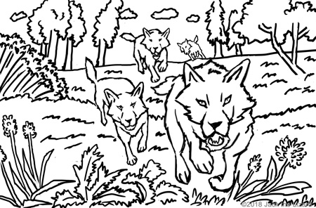 animal coloring pages jack the lizard wonder world Mammal South Southeast Asia coloring pages of gray wolf