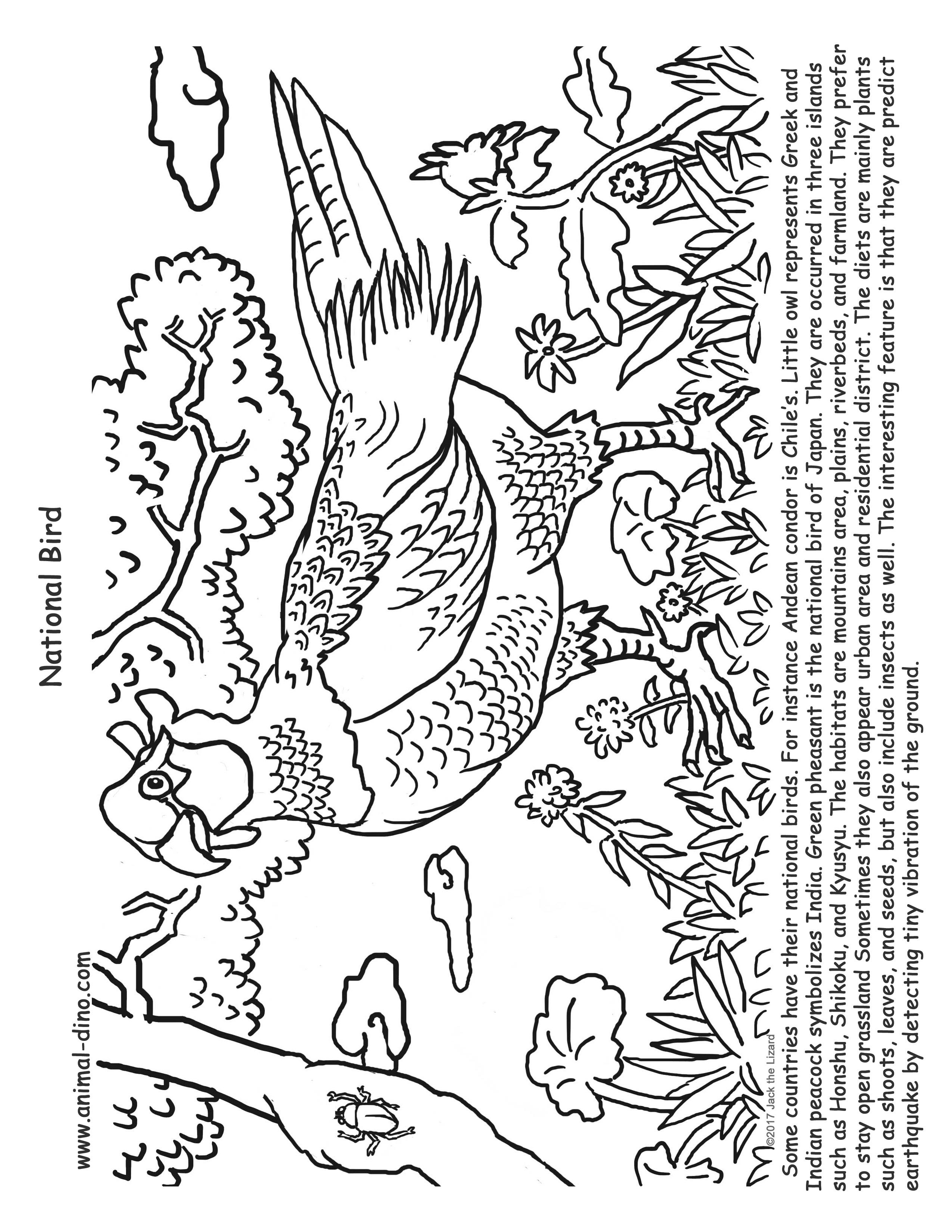 Animal Coloring Page (Green Pheasant) Print Size - Jack the Lizared ...