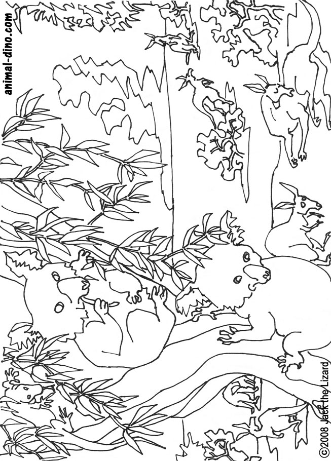 Animal Coloring Page Koala Bear Print Size