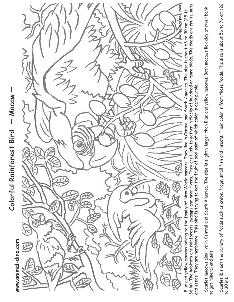 Flying Macaw Coloring Page Macaw Print Jpg