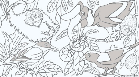 Coloring Pages Of Central American Wildlife Malaysian Birds