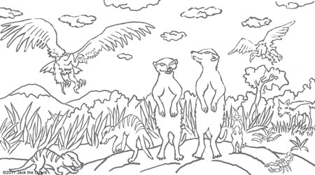 coloring pages of meerkat meerkat pictures to print