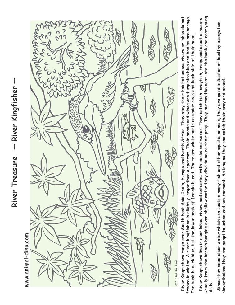 Animal Coloring Page (River Kingfisher) Print Size   Jack The Lizared  Wonder World