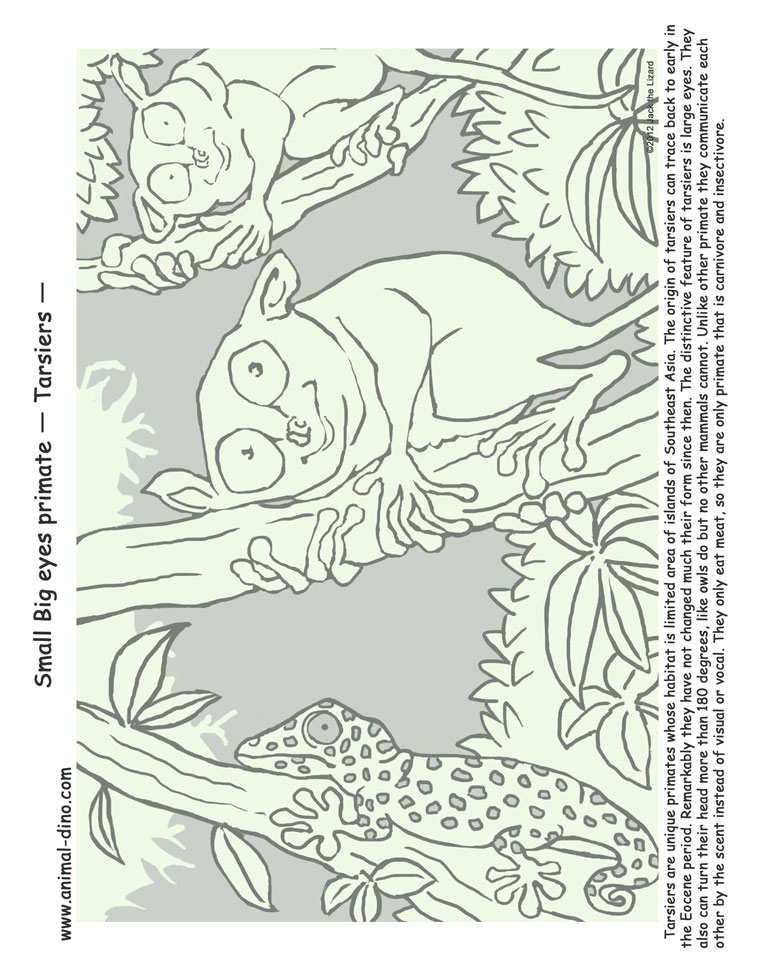 Tarsier Coloring Pages Learny