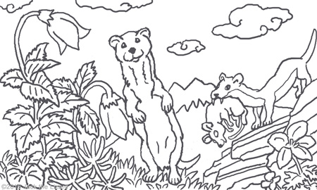 Coloring Pages of Weasel