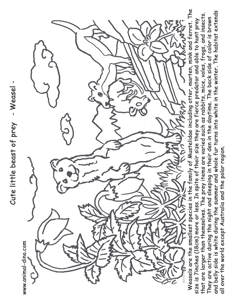 Animal Coloring Page Weasel Print Size Jack the