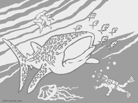 Coloring Pages of Whale Shark