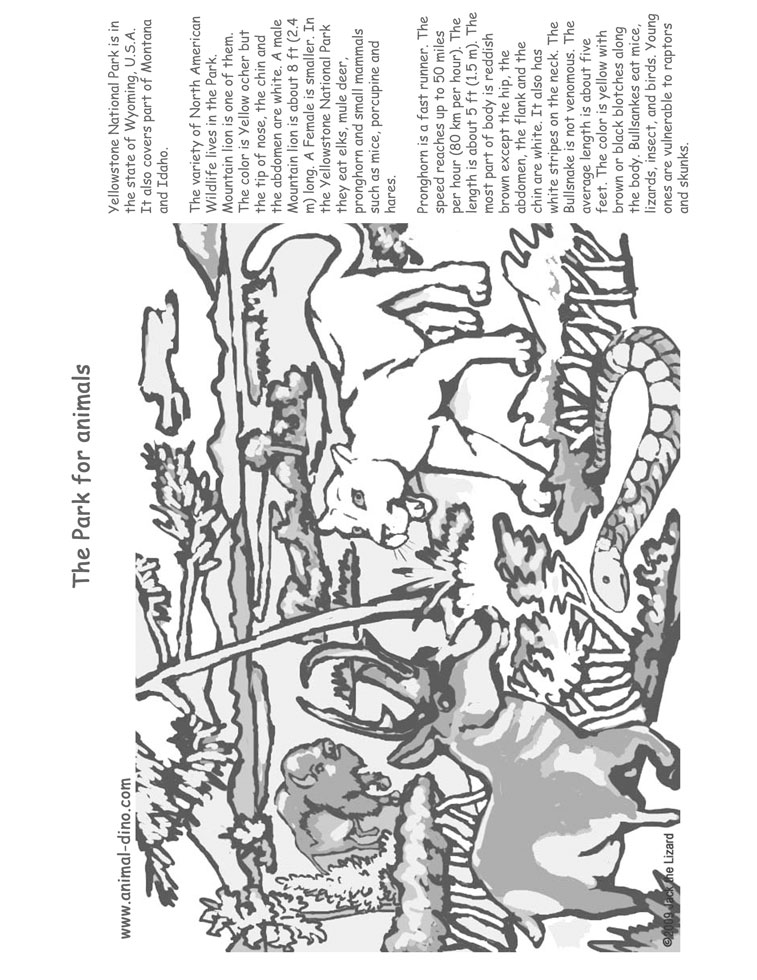 Animal Coloring Page (Yellowstone National Park) Print Size   Jack The  Lizared Wonder World