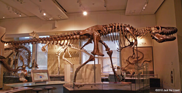 Daspletosaurus, Canadian Museum of Nature