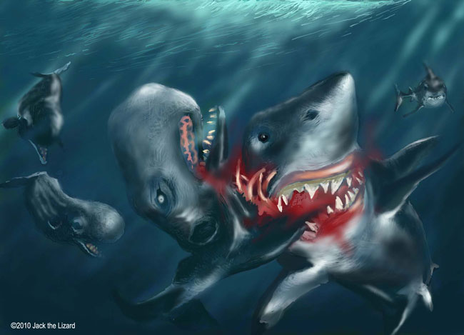 Image Gallery Megalodon Squid