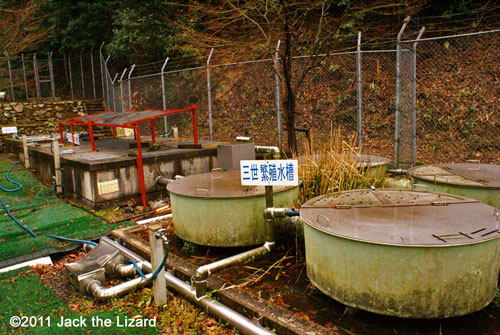 Breeding facility for Japanese Giant Salamanders. It is not open for the public, but zoo staffs invite graduate students and educator on demand.