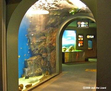 Port Of Nagoya Public Aquarium Photo Gallery Jack The