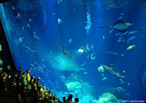Ibaraki Prefectural Oarai Aquarium Photo Gallery - Jack the Lizard Wonder World